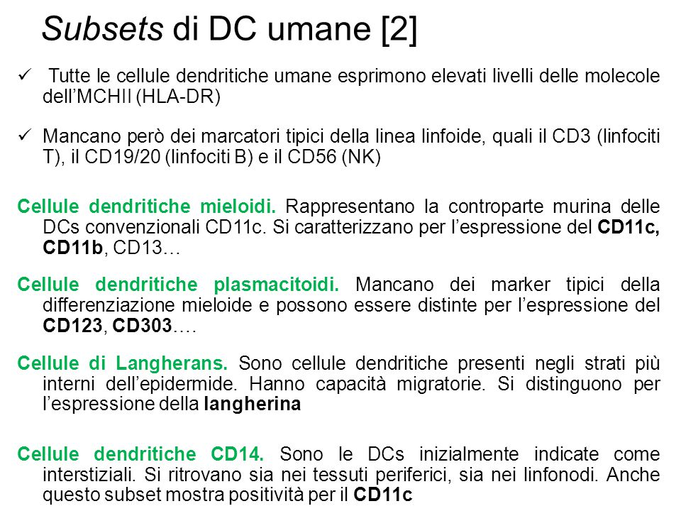 Subsets di DC umane [2] Tutte le cellule dendritiche umane esprimono elevati livelli delle molecole dell'MCHII (HLA-DR)